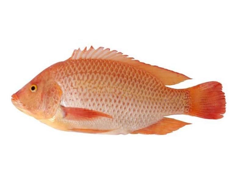 Cá Diêu Hồng